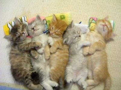 anak kucing tidur ramai