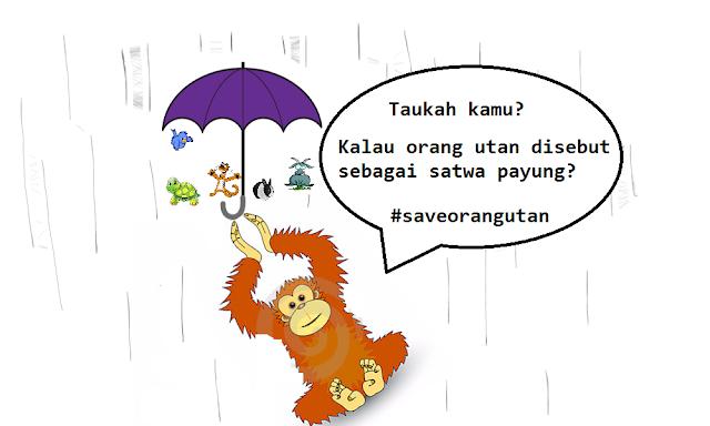 Orangutan satwa payung