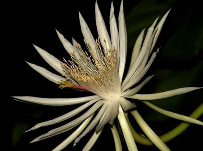 Las Flores Más Caras Del Mundo Blog Patricia López Diseño Floral