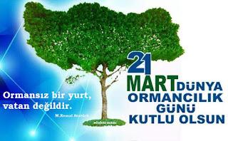 21 mart dünya ormancılık günü, ormanları nasıl koruruz, doğayı nasıl korumalıyız, ormanların faydaları, orman nedir, türkiyenin orman varlığı, orman ile ilgili sözler, orman atasözleri, orman hadis,