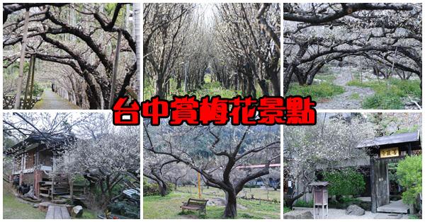 台中賞梅花7處景點,除了南投以外的好選擇,持續更新