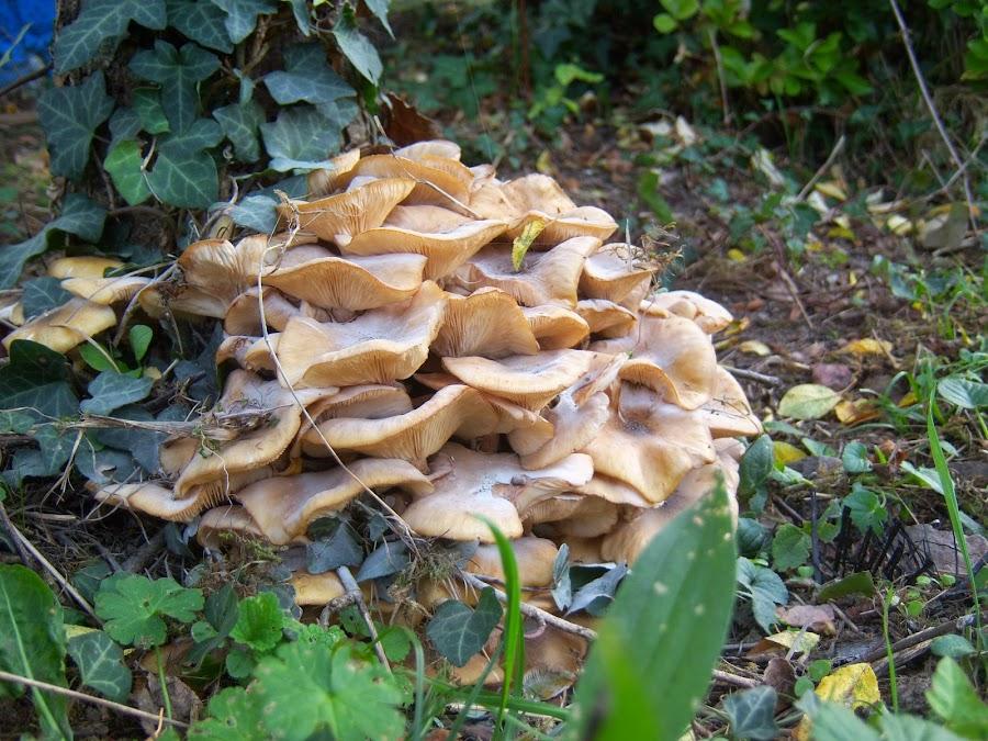 Setas amontonadas al pie de un árbol