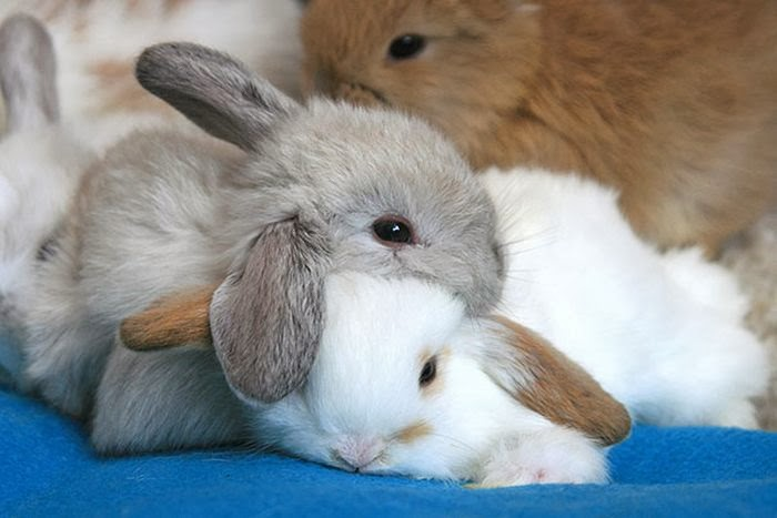 Funny animals of the week - 14 February 2014 (40 pics), cute bunny picture