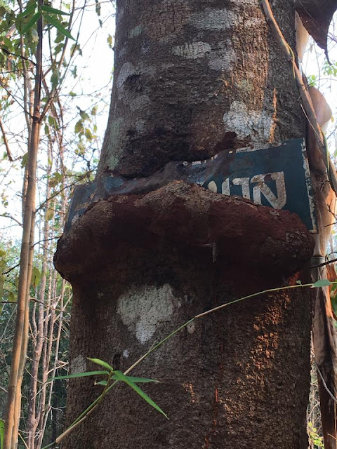 A an old sign at the summit of Khao Ruak being swallowed by the tree.