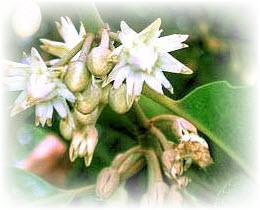 Pantun merupakan salah satu jenis puisi lama yang sudah dikenal luas dalam budaya Nusantar Mencari Kata Sulit dalam Pantun