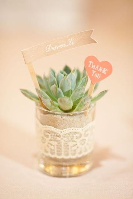 miniaturowe sukulenty, małe kaktusy