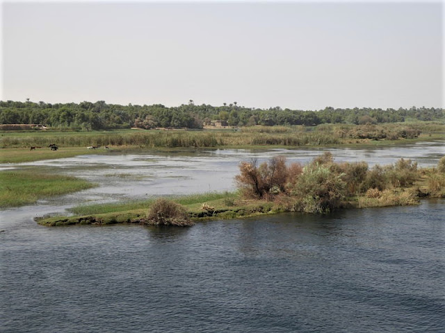 isolotti e pascoli lungo il Nilo