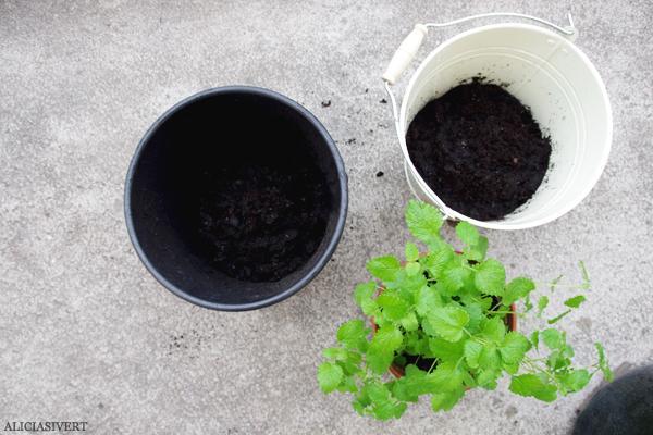 aliciasivert, alicia sivert, alicia sivertsson, odling, plantera, änglamark, ekologisk potatis, änglamarks ekologiska odlingsjord, kruka, skott, potatis, potatisplanta, gro, grodd, hink, kruka, balkong