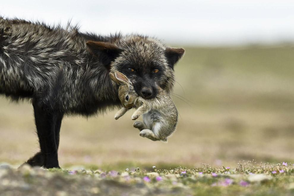 Фотографии с конкурса National Geographic Travel Photographer 2017