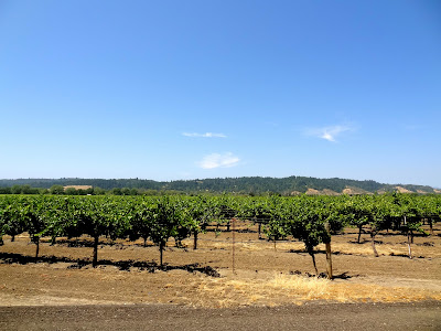 Sonoma County Vineyards