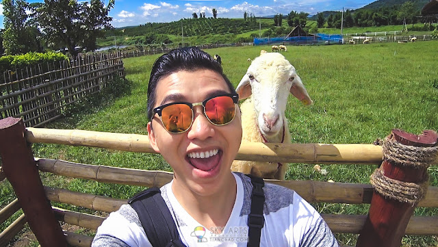 Why I did Eyebrow Embroidery? To look better and boost self confidence when selfie with a sheep hahaha #TCSelfie *Photo taken at A Star Phulare Valley Resort Chiang Rai *