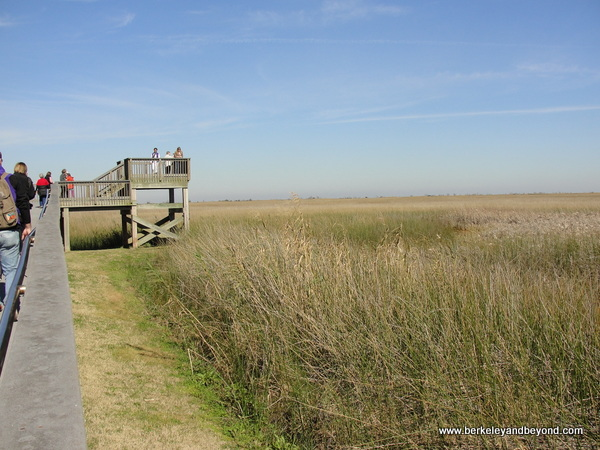 observation tower at Sabine National Wildlife Refuge Wetland Walkway in Louisiana
