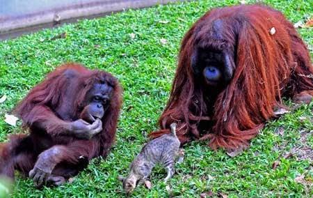 Wisata Kebun Binatang Ragunan
