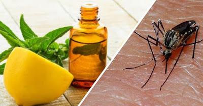 Aceite eucalipto contra mosquitos