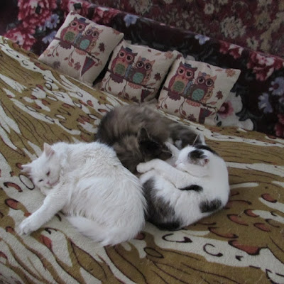 Кошки тоже умеют дружить