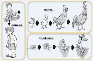 Definisi atau Pengertian Pertumbuhan dan Perkembangan pada Makhluk Hidup beserta Contohnya