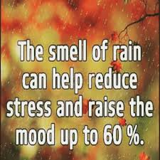 smell of rain quotes and captions