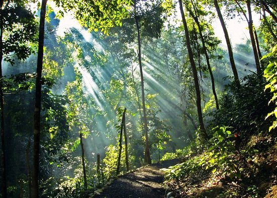 beautiful sunrays shining through the trees to the jungle floor at penang tropcial spice garden