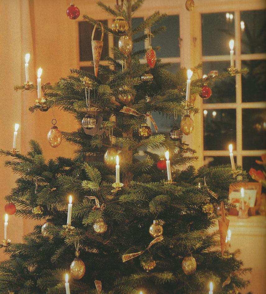 Danish Christmas Trees