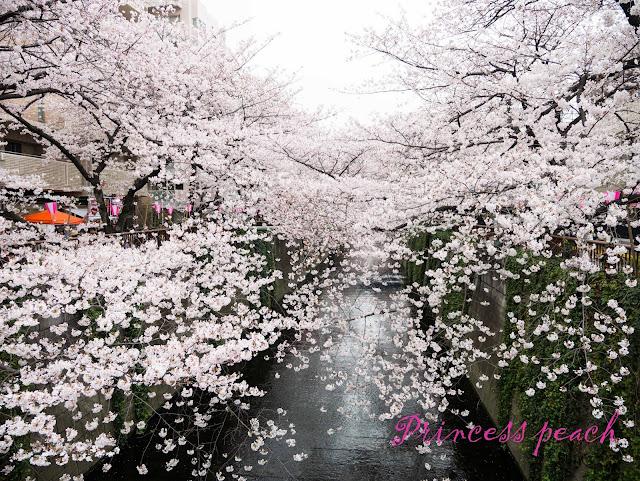 日本: 櫻花漫舞東京親子遊 – 東京哲學之道之目黑川夜櫻~!!! (Tokyo, Japan)