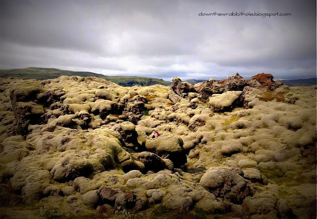 Iceland vegetation, Iceland volcanic rocks, things to see in Iceland