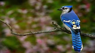 ζώα με μπλε χρώμα