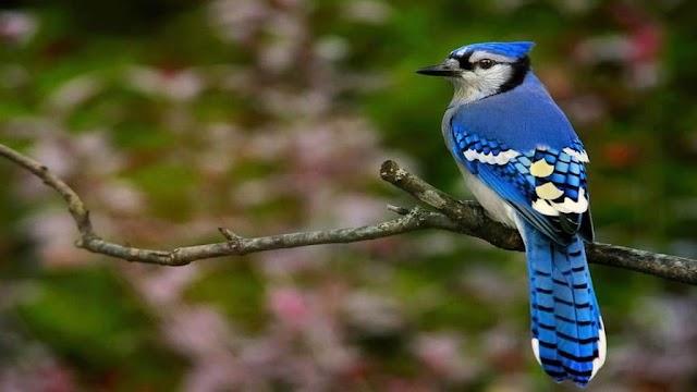 Γιατί δεν υπάρχουν πολλά ζώα με μπλε χρώμα?
