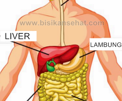 10 Cara Menjaga Sistem Organ Pencernaan Supaya Terhindar Dari Penyakit