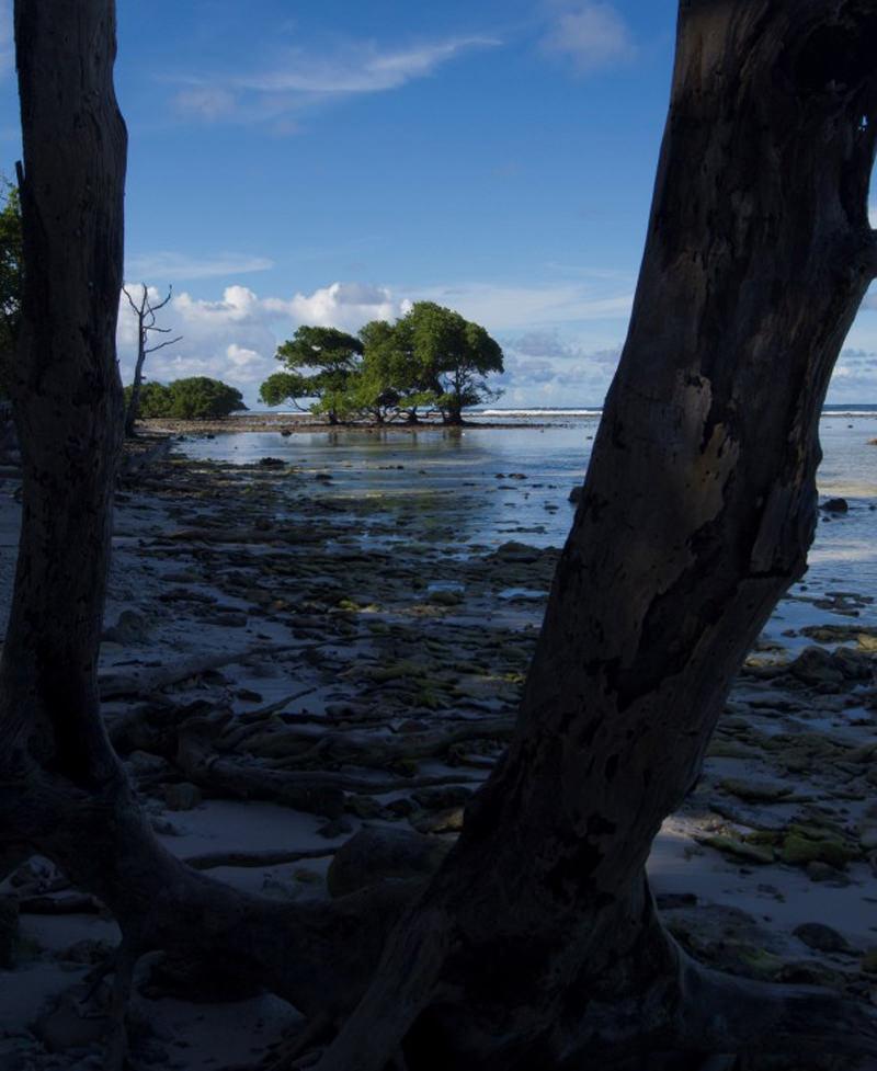 Manglar Isla Kosrae