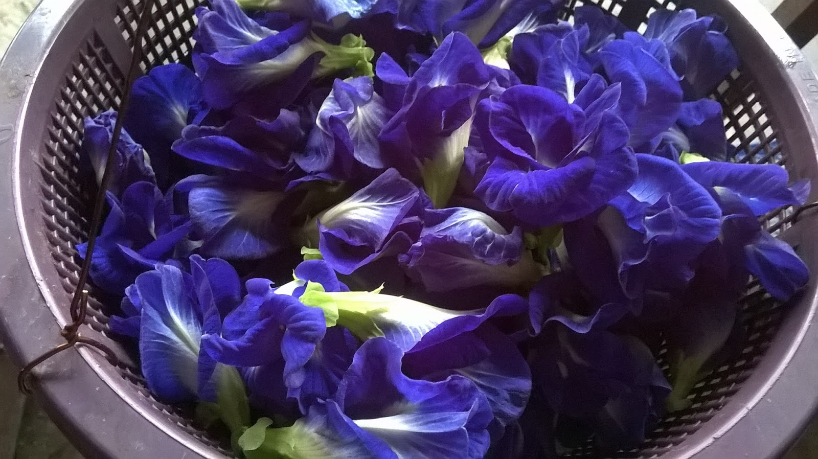 To Make The Tea Boil Water And Pour Boiling Over Dried Flowers Steep Till Color Of Changes Blue