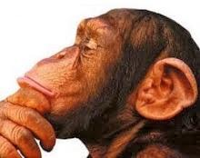mono simio pensando