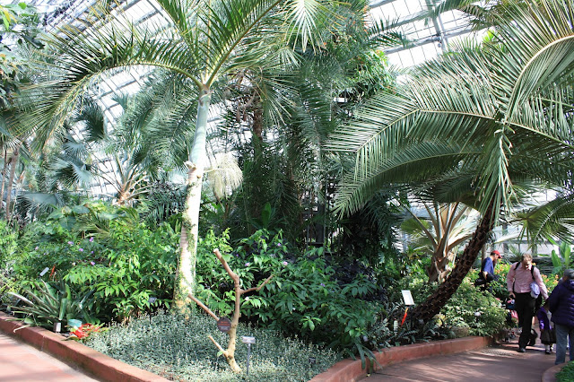 Garfield Park Conservatory Palm Room