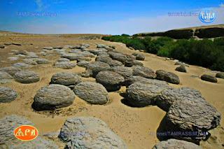 Янгы-гала, Огненные скалы, Розовый каньон - так называют местность на древнем плато Устюрт южнее залива Гарабогаз-гол на северо-западе Балканского велаята (165км от Балканабада и 160км от Туркменбаши).  Горная страна, похожая больше на мираж и сказку... Десятки миллионов лет назад на дне древнего океана Тетис образовались слагающие эту местность известняковые осадочные породы. Современное Каспийское море - наследник этого гигантского водоема далекого прошлого.  Каньоны представляют собой невероятно красивое зрелище. Самое интересное то, что в зависимости от времени суток, цвет горных пород меняется прямо на глазах – от чисто белого до огненно-красного. Но особенно красивы они на закате, когда всё вокруг окрашивается в огненные тона. Подобную достопримечательность можно увидеть в Китайском Синьзяне, которую также называют «огненные горы».  YangyngalaОбъехать огромную территорию каньонов практически невозможно, но советуем посетить еще одно замечательное место – Каньон Кемаль-Ата. Здесь, посреди пустыни, непонятно откуда, появился источник и пробил в скалах небольшой каньон. К источнику приводят на водопой стада овец и верблюдов. Но самое интересное – это необычные каменные образования, напоминающие яйца динозавров или яйца-зародыши из культового фильма «Чужой». Здесь их множество, причем множество из них наполовину «замурованы» в стенах каньона.  Ночевать рекомендуем остановиться в центре паломников у погребения святого Газли-Ата, рядом с захоронениями датируемых с IX-X вв. Центр также находится в одном из каньонов и также окружен «огненными» горами и обрывами.