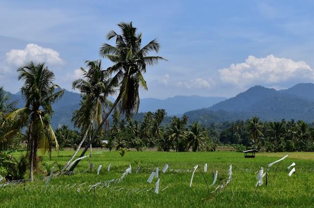 Wisata Unik Ala Minang Heritage Sumatera Barat