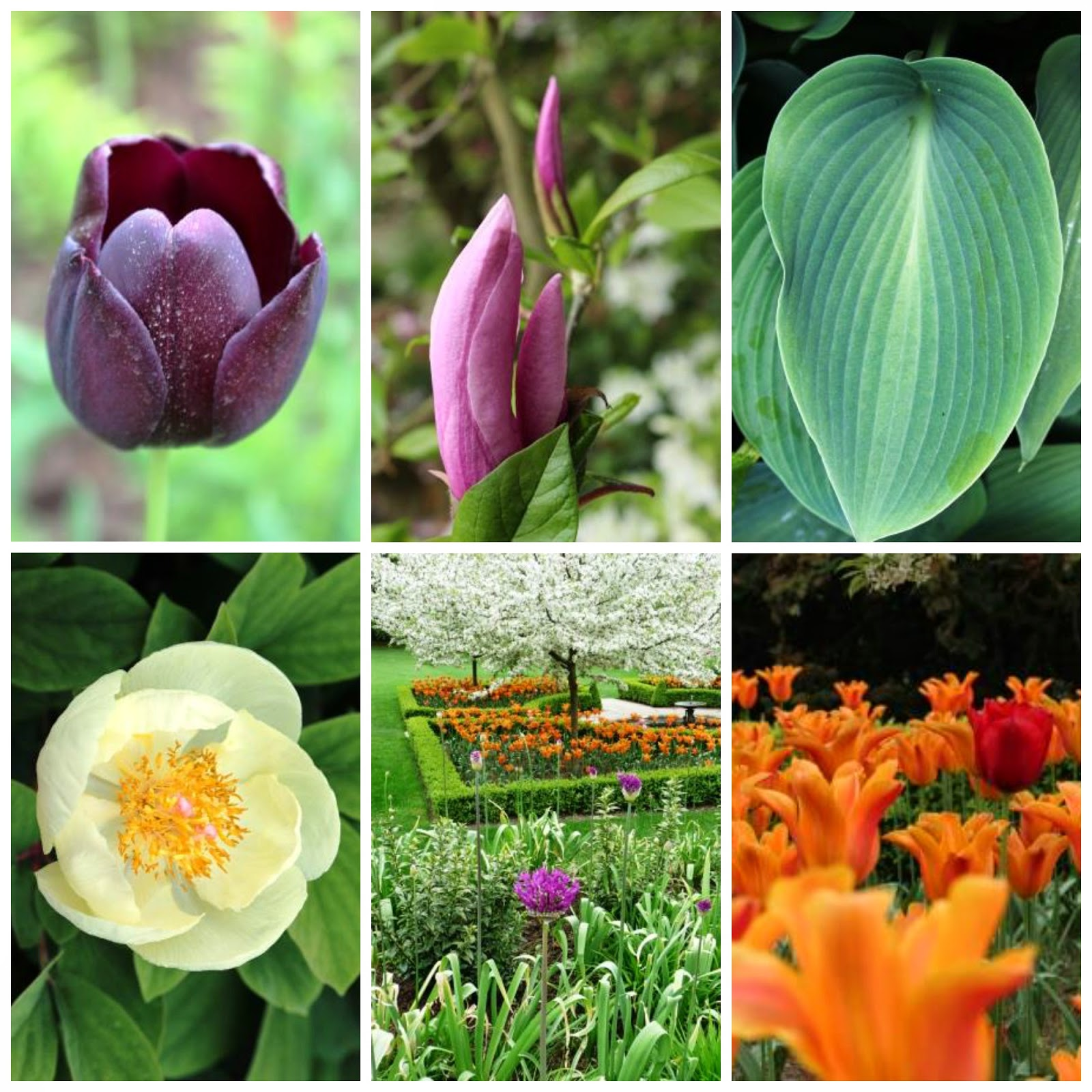 http://www.lifeofpottering.co.uk/2014/05/eglwysbach-north-wales-bodnant-gardens.html
