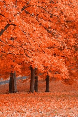 Jesen, listovi download besplatne slike pozadine Apple iPhone