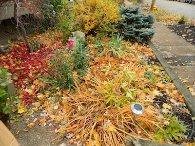 Coxwell-Danforth Toronto Fall Cleanup Front Yard Before by Paul Jung Gardening Services--a Toronto Organic Gardening Company