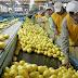 El gobierno de Trump confirmó que volverán a importar limones argentinos