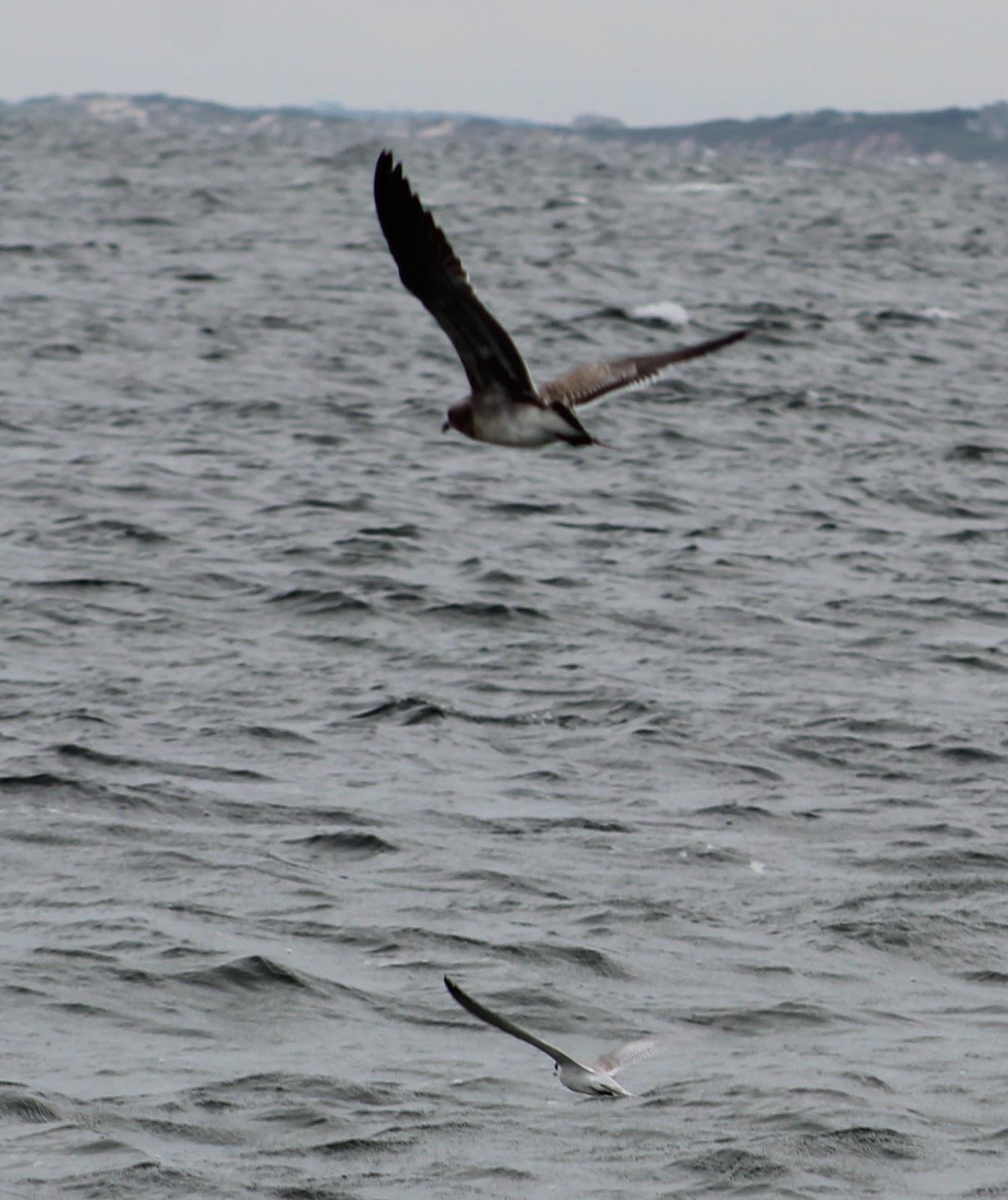 Cape Cod Bird Nerd