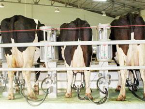 süt sagılması sagılamayan sütler