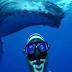 Αυτή η selfie θα μείνει στην ιστορία - Δύτης και φάλαινα σε μία υπέροχη πόζα γίνονται viral στο διαδίκτυο (video)