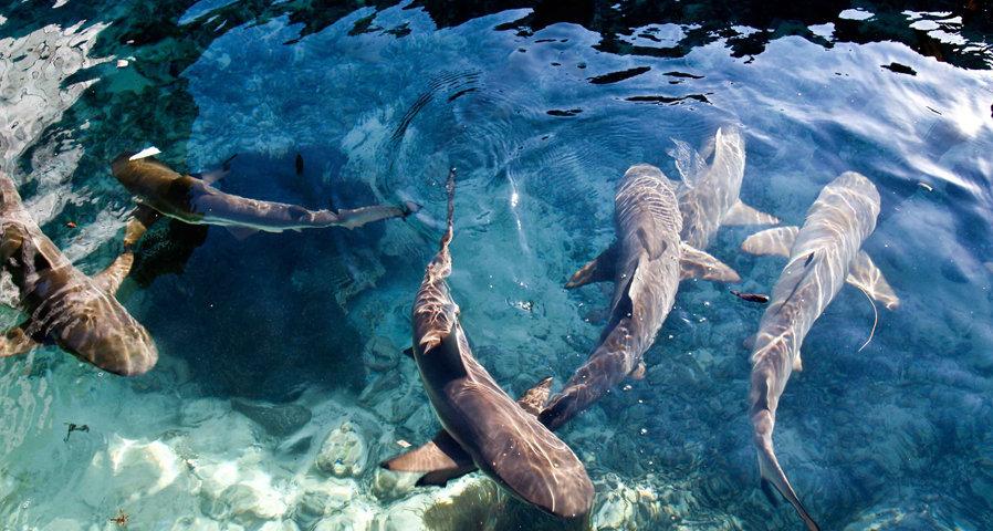 Objek Wisata Taman Nasional Karimunjawa Eksotisme Kepulauan Di Tanah
