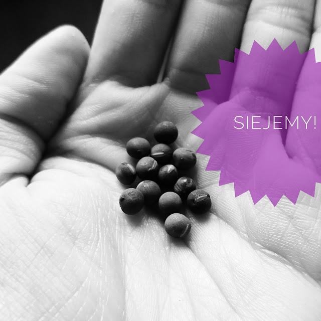 Kupujesz nasiona, cebule, kłącza? Przeczytaj na co zwrócić uwagę!
