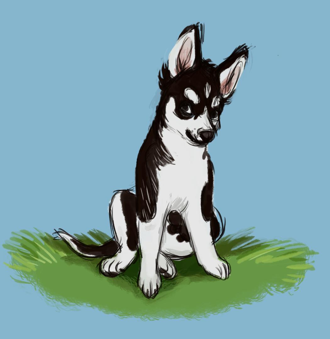 Cute Husky Puppy Drawings Cute Husky Puppy DrawingCute Husky Puppy Drawings