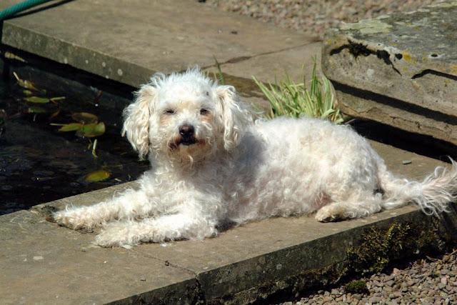Image: Photograph of Man's Best Friend: a Dog (c) FreeFoto.com. Photographer: Ian Britton