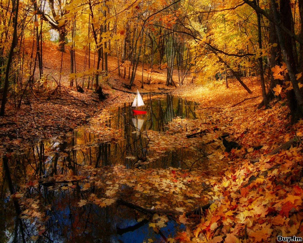 Falling In Love Hd Wallpapers Daily Cool Pictures Gallery 45 Wonderful Autumn