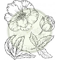 https://sklep.agateria.pl/pl/kwiaty/1507-peonia-zestaw-2-duzy-5902557830268.html