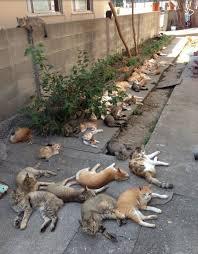gatti-su-marciapiede