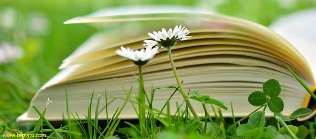 Download dan dapatkan contoh soal latihan uas/ pas tematik kelas 6 semester 1 tema 1 kurikulum 2013 edisi revisi terbaru disertai kunci jawabannya