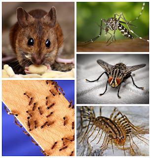 Some insects and pests and their control measures
